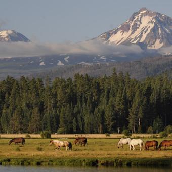 Black Butte Ranch Horses in Meadow