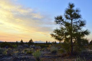 Settlement Reached in Tree Farm LUBA Appeal