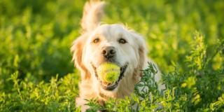 Celebrate National Dog Day in Bend, Oregon
