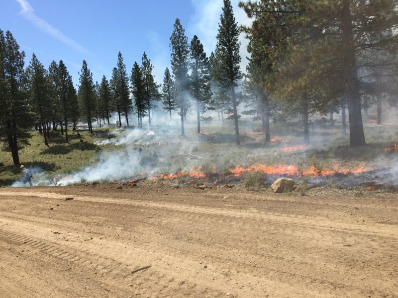 Tree Farm Prescribed Burn